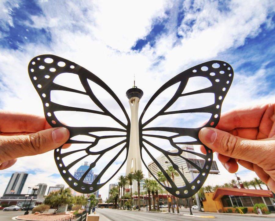 motýľ