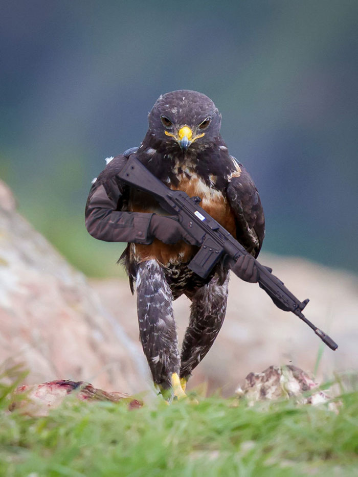 funny-hawk-photoshop-battle-1-57f1fd483716e__700