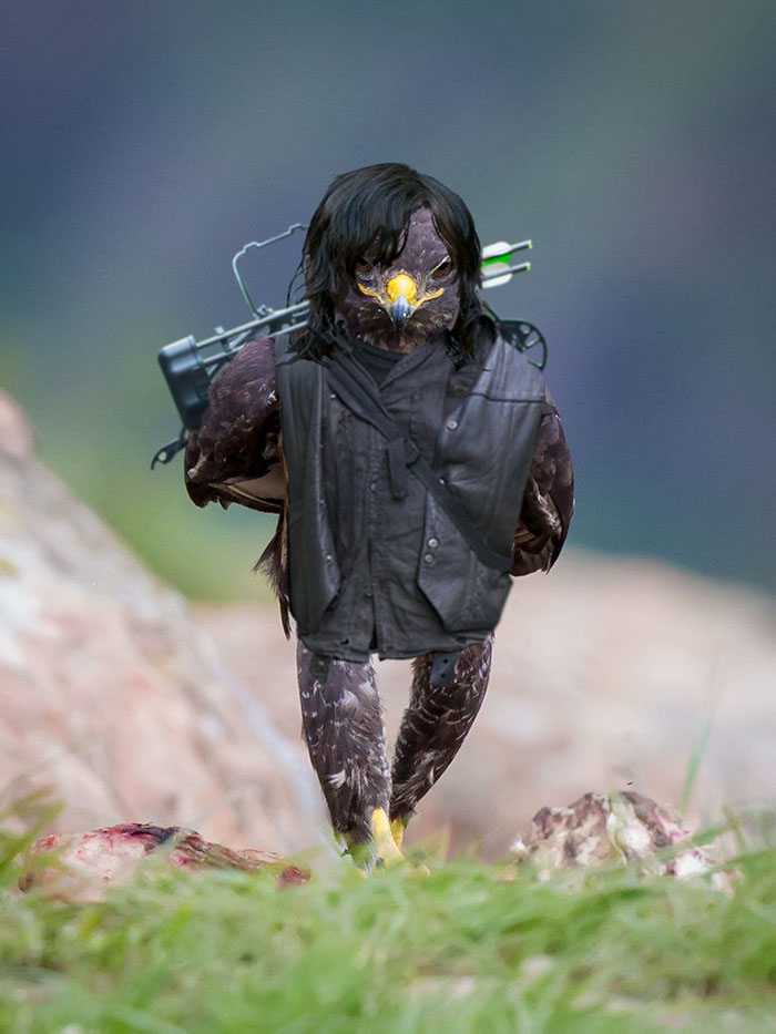 funny-hawk-photoshop-battle-23-57f1fd773200b__700
