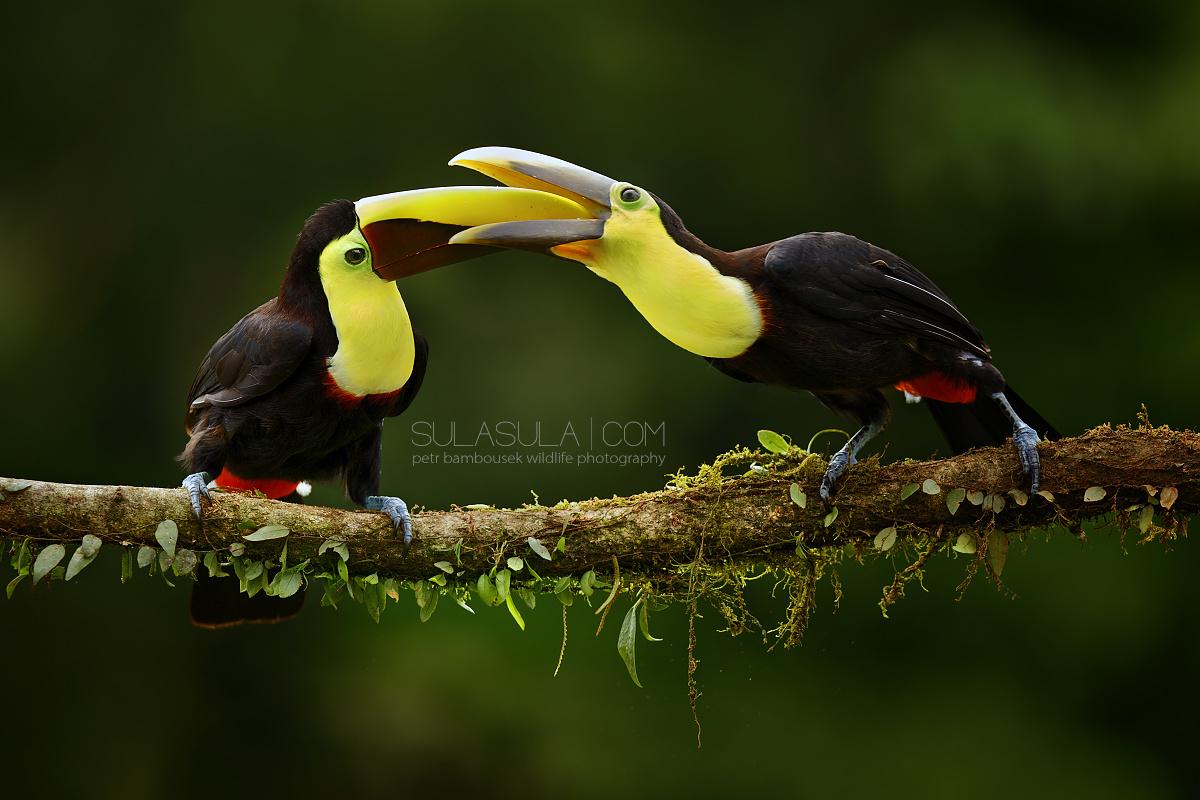 Fascinujúci svet prírody predstaví Petr Bambousek. Navštívime s ním exotické Borneo.